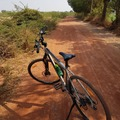 For Rent: Rent bicycle in udaipur (Rajasthan)
