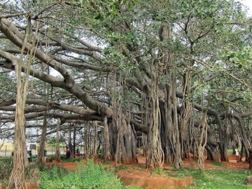 Events: Big Banyan Tree Cycling In Bangalore