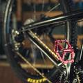 Bike Stores: Procycling